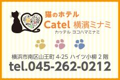 猫のホテル Catel横濱ミナミ