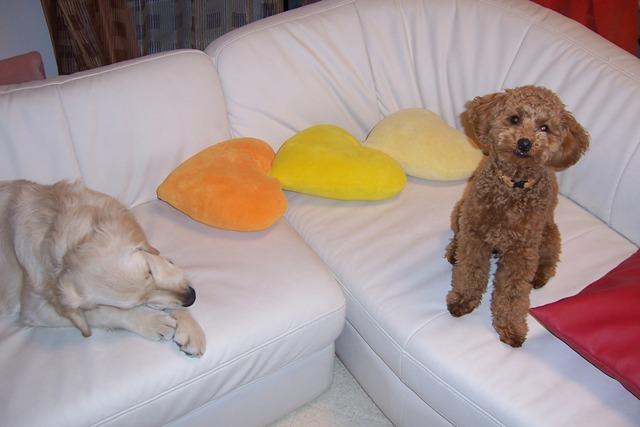 犬のホテル DOG INN NAO